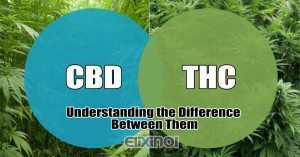 Cannabidiol-vs-THC