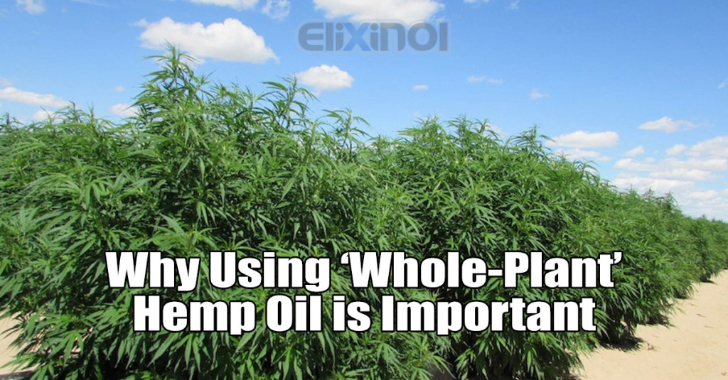 whole plant hemp oil