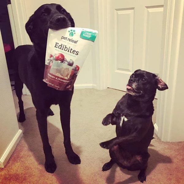 Two excited dogs, one is holding a packet of Elixinol Pet Releaf Edibites in his mouth