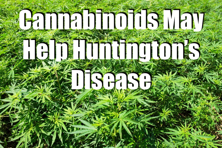 Cannabinoids May Help Huntingtons Disease