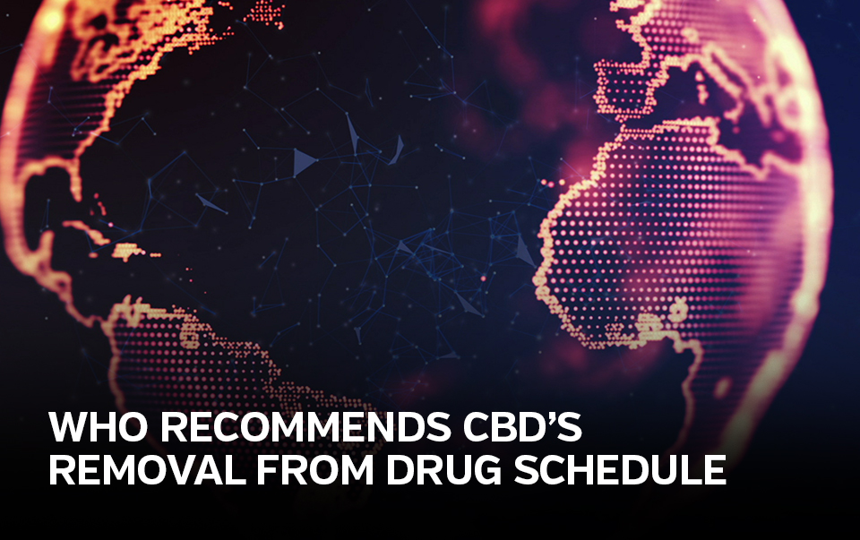 "image of the globe captioned ""who recommends CBD's removal from Drug Schedule"""