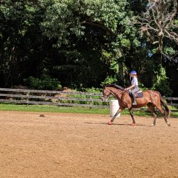 What To Do If Your Horse Leans In Or Drops His Shoulder
