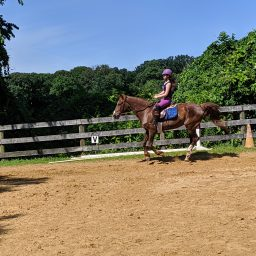 Simple Solutions For Problems At The Canter!