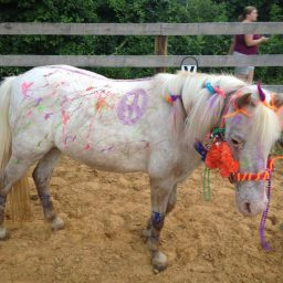 The Story Of My Life Is The Story of The Horses In It- Tammy #1 AKA Fluffernutter