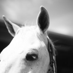 The Story Of My Life Is The Story Of The Horses In It: Gray