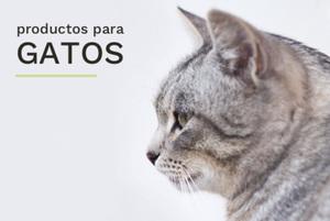 El_patio_categoríagato