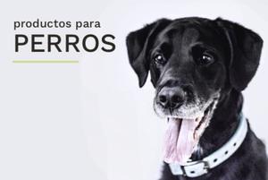 El_patio_categoría_perro
