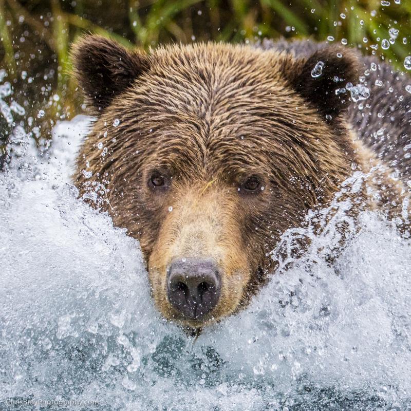 chris-bray-bears-box-0007