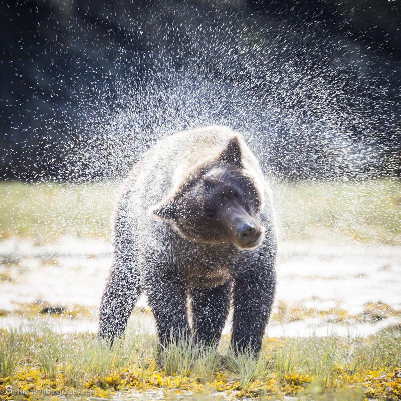 chris-bray-bears-box-0006