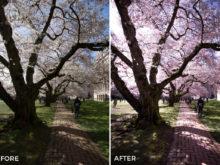 7 Alexander Zhuk Spring & Sakura Lightroom Presets - FilterGrade Marketplace