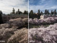 3 Alexander Zhuk Spring & Sakura Lightroom Presets - FilterGrade Marketplace