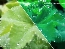 7 Vibrant Greens - Jesmer Folkerts Lightroom Presets - Jesmer Folkerts Photography - FilterGrade Digital Marketplace