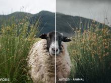 4 Animal- Lukas De Groodt Lightroom Presets - FilterGrade Digital Marketplace