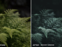 Moody Greens - Dmitry Shukin Lightroom Presets - FilterGrade