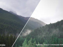 Foggy Canadian Forest - Niklas Nxploring Lightroom Presets - FilterGrade
