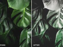 9 Nick Asphodel Artistic Tones Lightroom Presets - FilterGrade