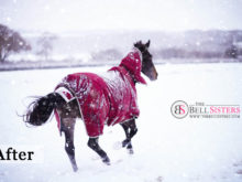 4 Featured - The Bell Sisters Snow Textures Pack - FilterGrade