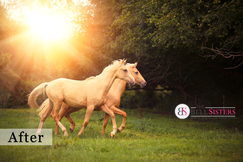 4 Featured - The Bell Sisters Sunflares Pack - FilterGrade
