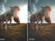 12 Nick Asphodel Film Lightroom Presets - FilterGrade