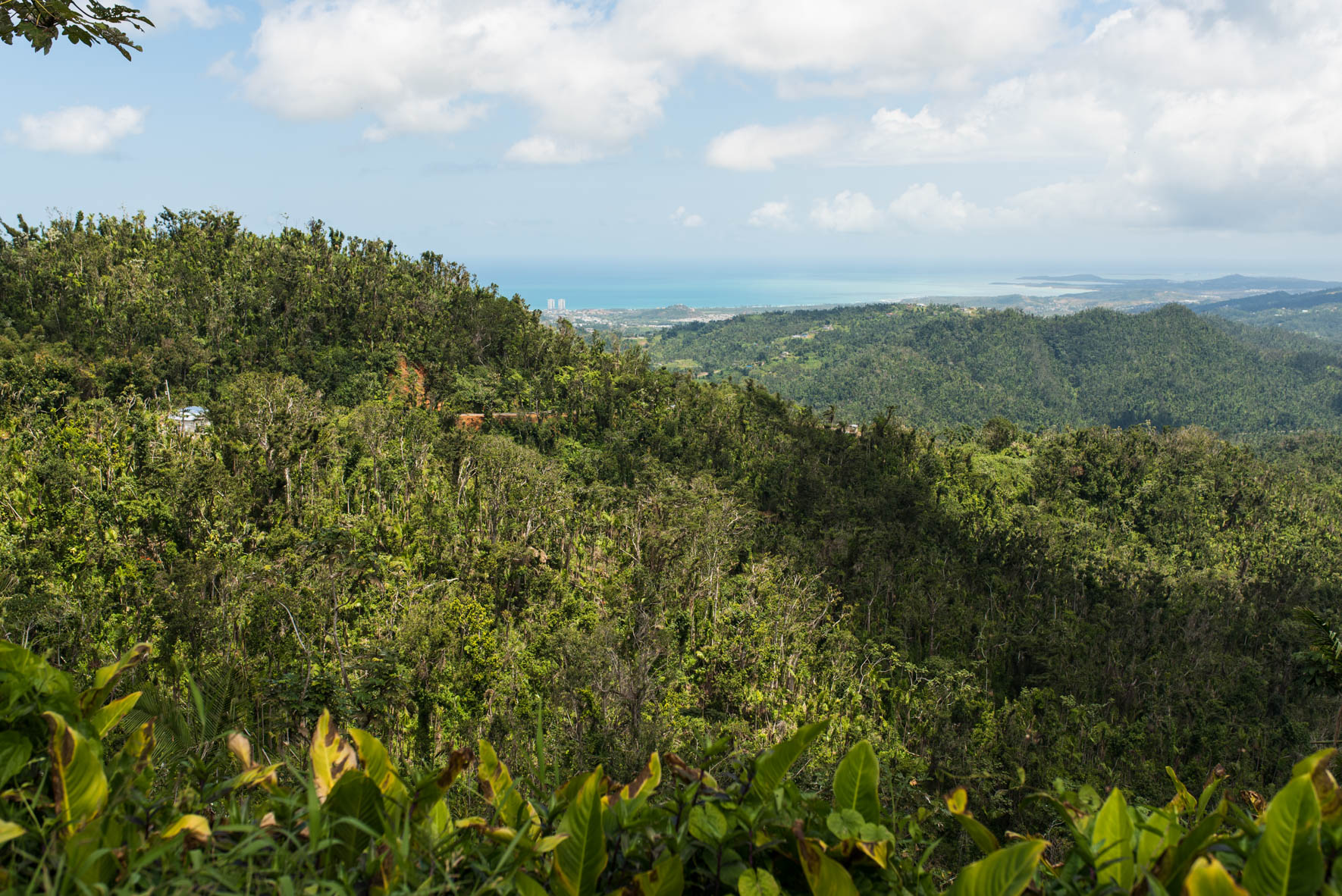 Looking at the beautiful blue oceans from the slopes of El Yunque