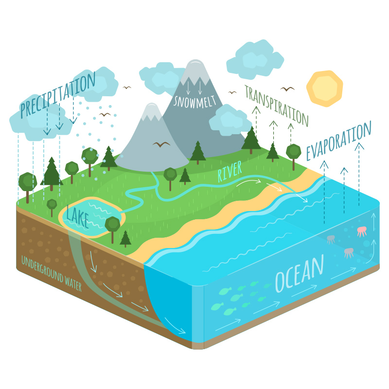 water cycle diagram illustration natalka dmitrova
