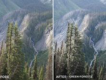 Green Forests - Catherine Simard Lightroom Presets - FilterGrade