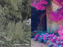 infrared bonus lut cineplus perfekta lut