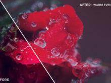 Warm Evening - Russell Cardwell Vivid 01 LUTs - FilterGrade