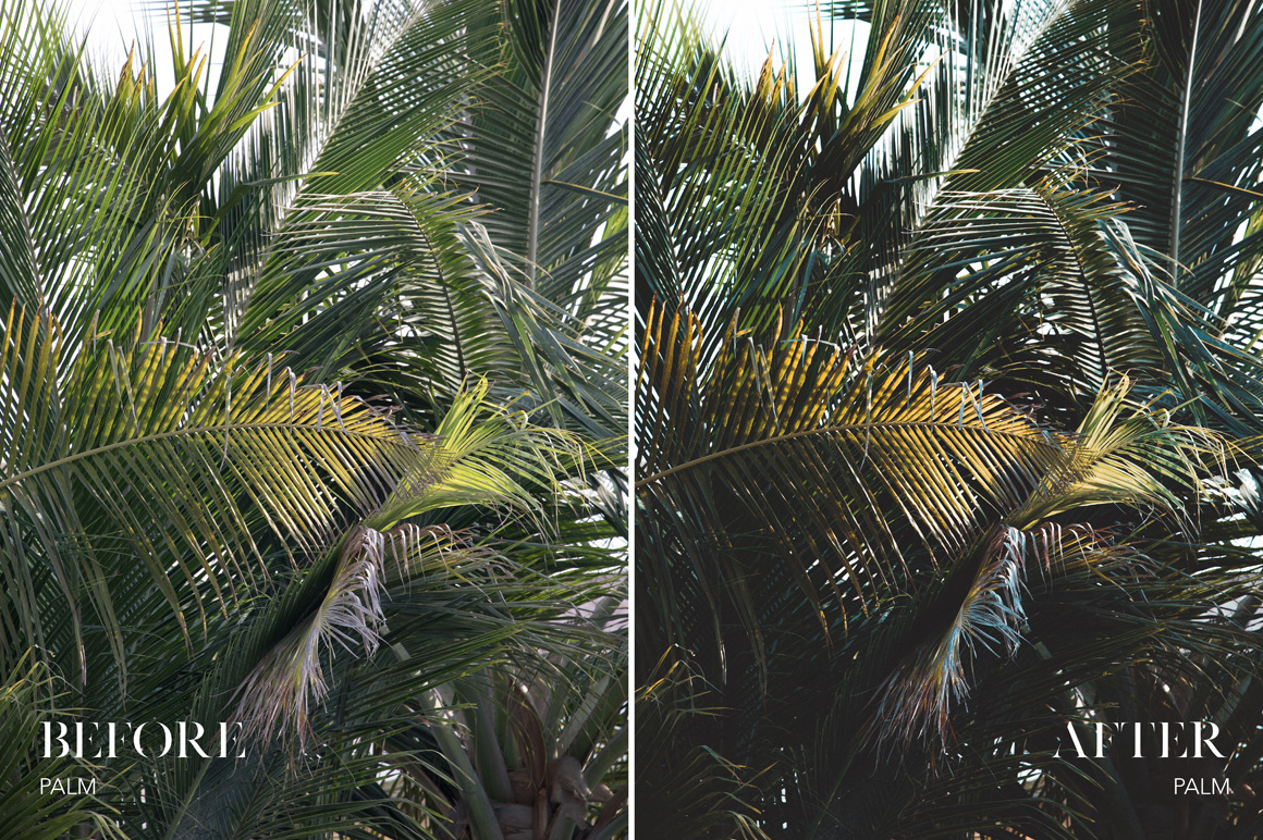 Palm - Joshua Fuller Lightroom Presets Vol. 5 Dubai - FilterGrade