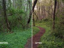 forest lightroom profiles for cameras