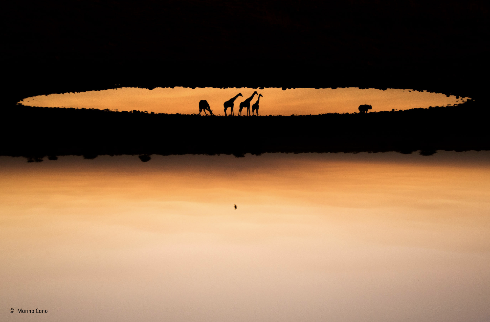Marina Cano Wildlife Photographer