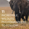Incredible Wildlife Photographers to Follow