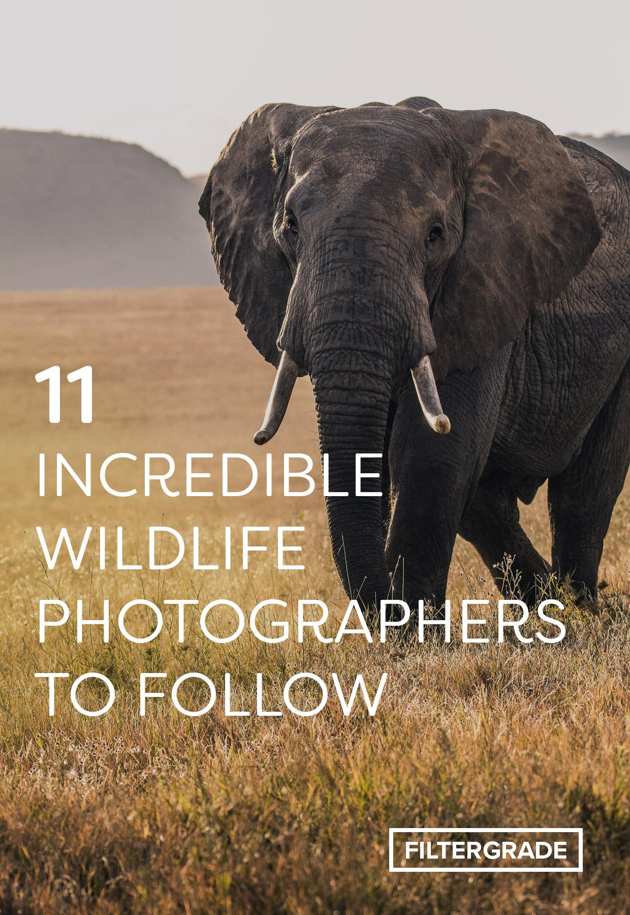 Incredible Wildlife Photographers to Follow