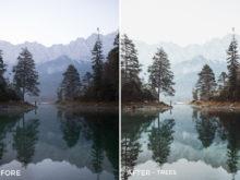 Trees-@evolumina-Autumn-Lightroom-Presets-FilterGrade