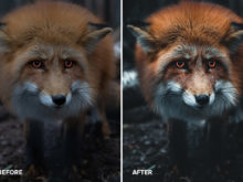 daniel weissenhorn wildlife photography presets