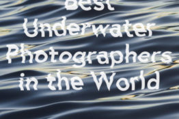 12 of the Best Underwater Photographers in the World