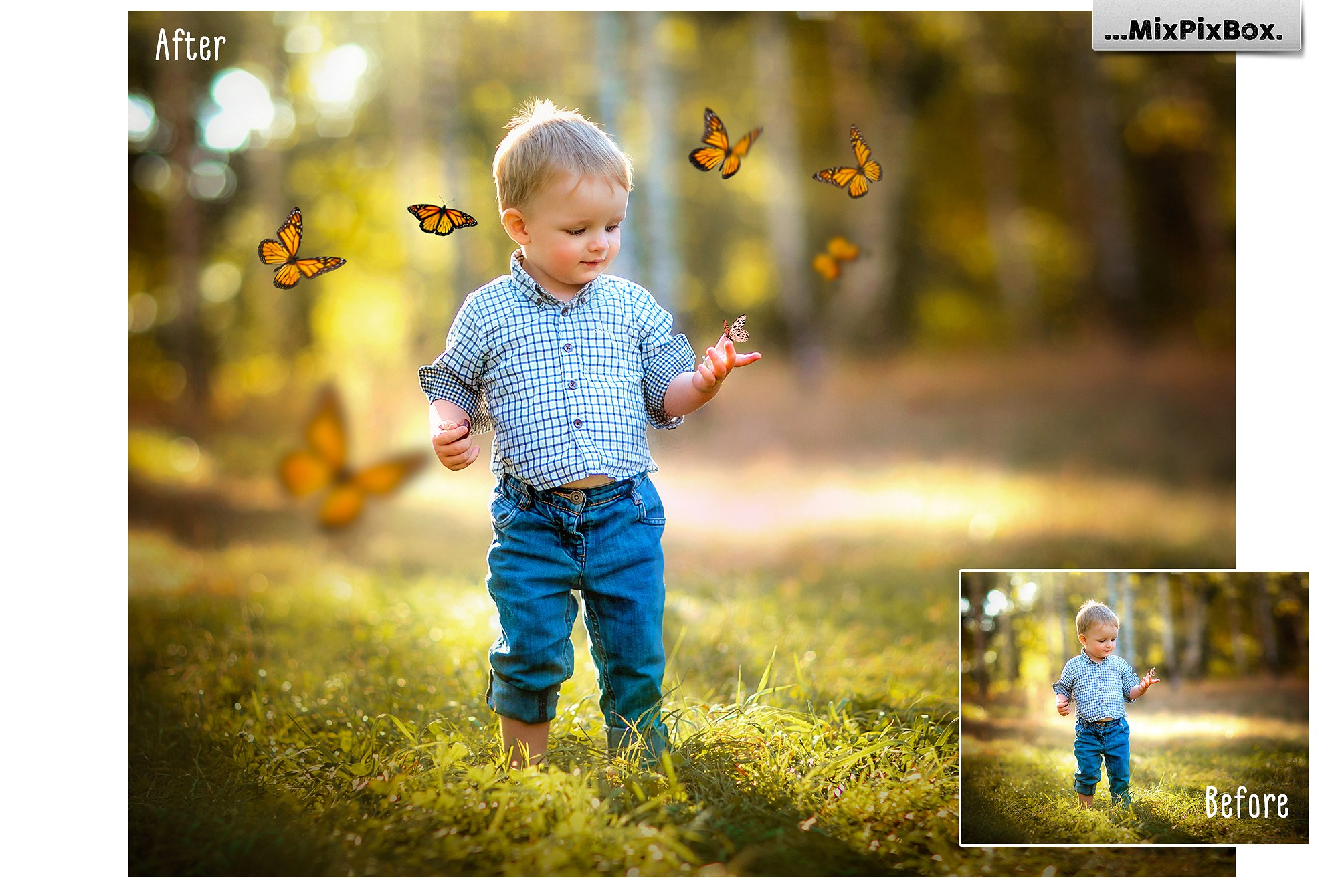 butterfly graphics overlays