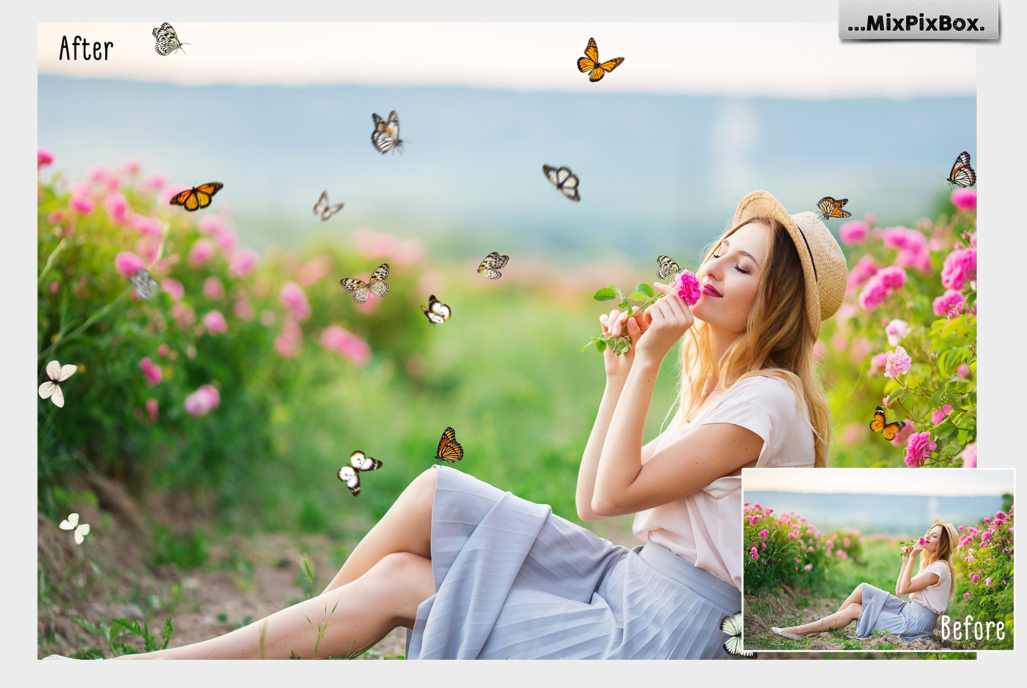 isolated butterfly overlays for photographers