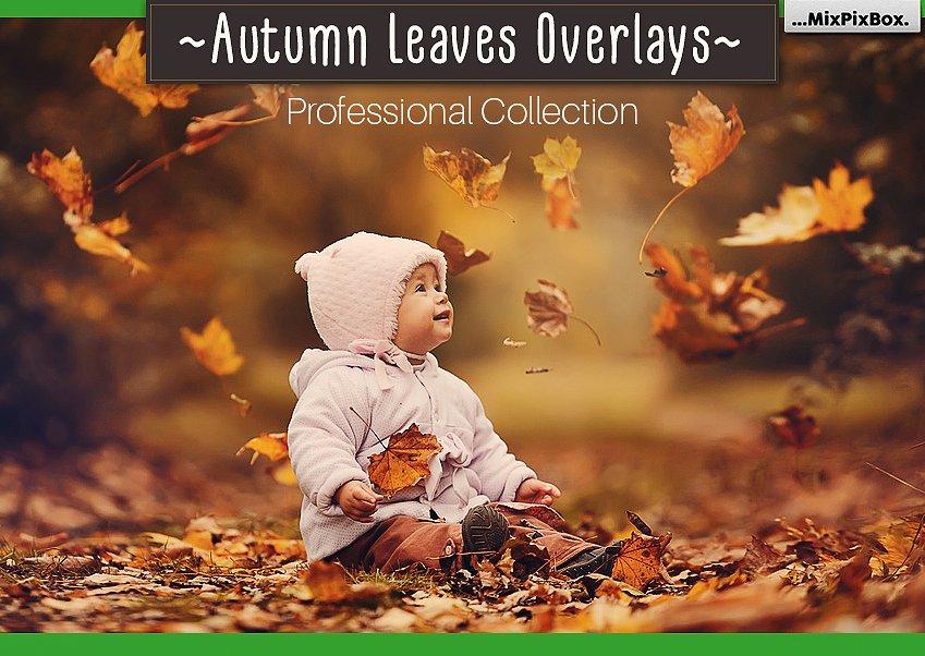 Autumn Leaves Photo Overlays