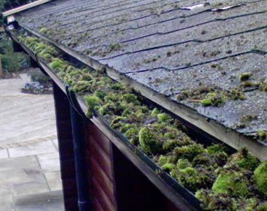 Roof Maintenance and Home Repairs