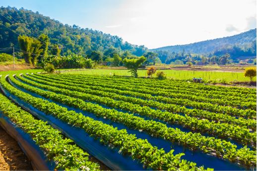 Colombia, primer país en América Latina con registro para herbicidas.