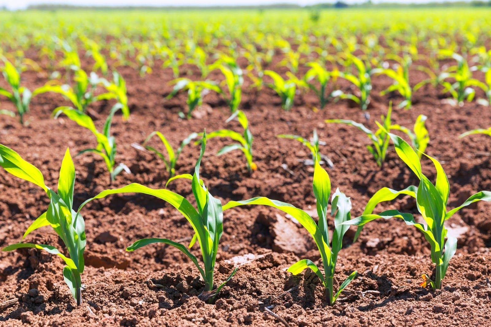 Ventajas y desventajas del uso de fertilizantes