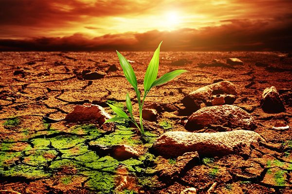 Prepara tus cultivos para temporada seca