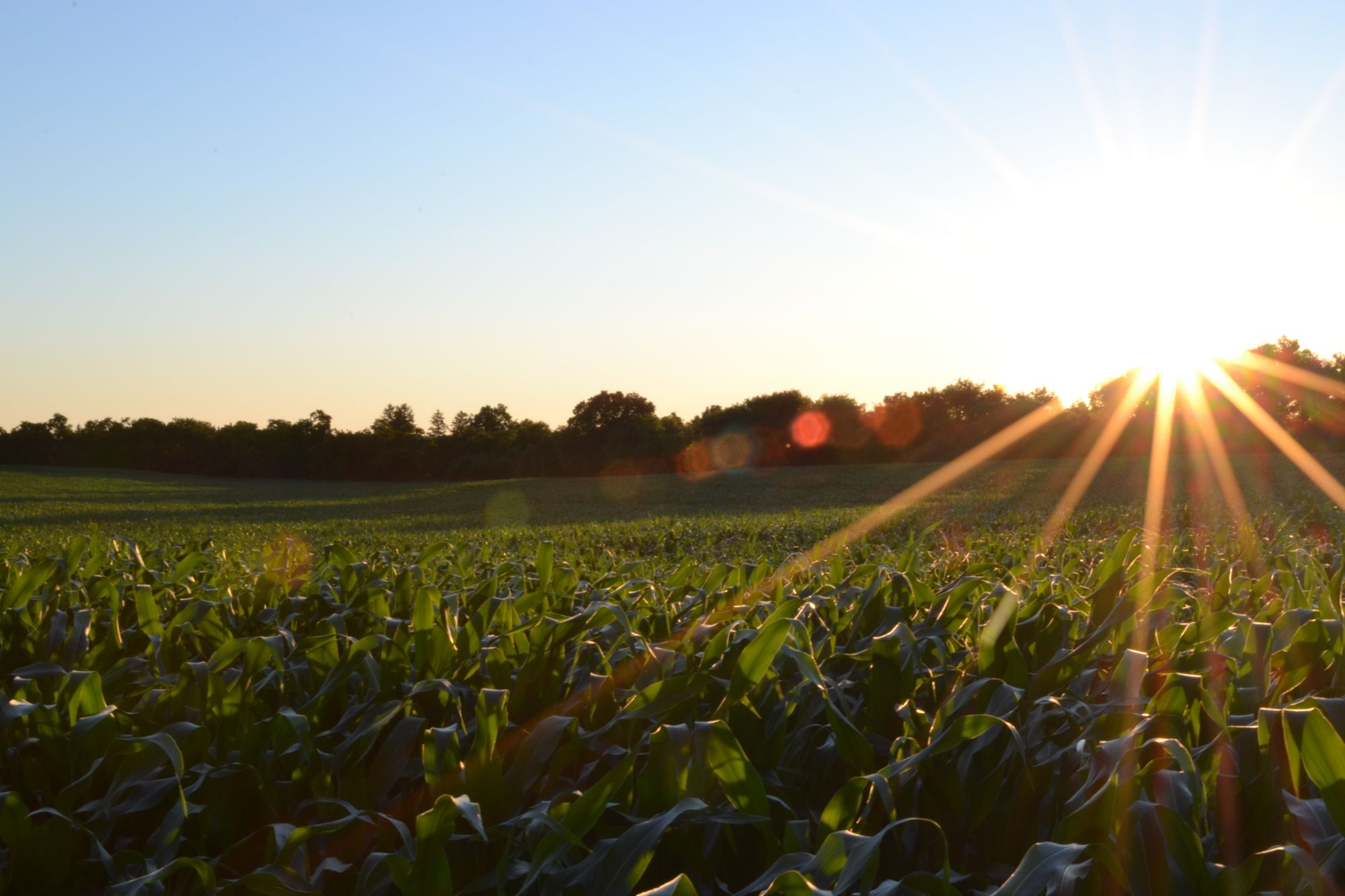 El agro, la solución para potencializar la economía.
