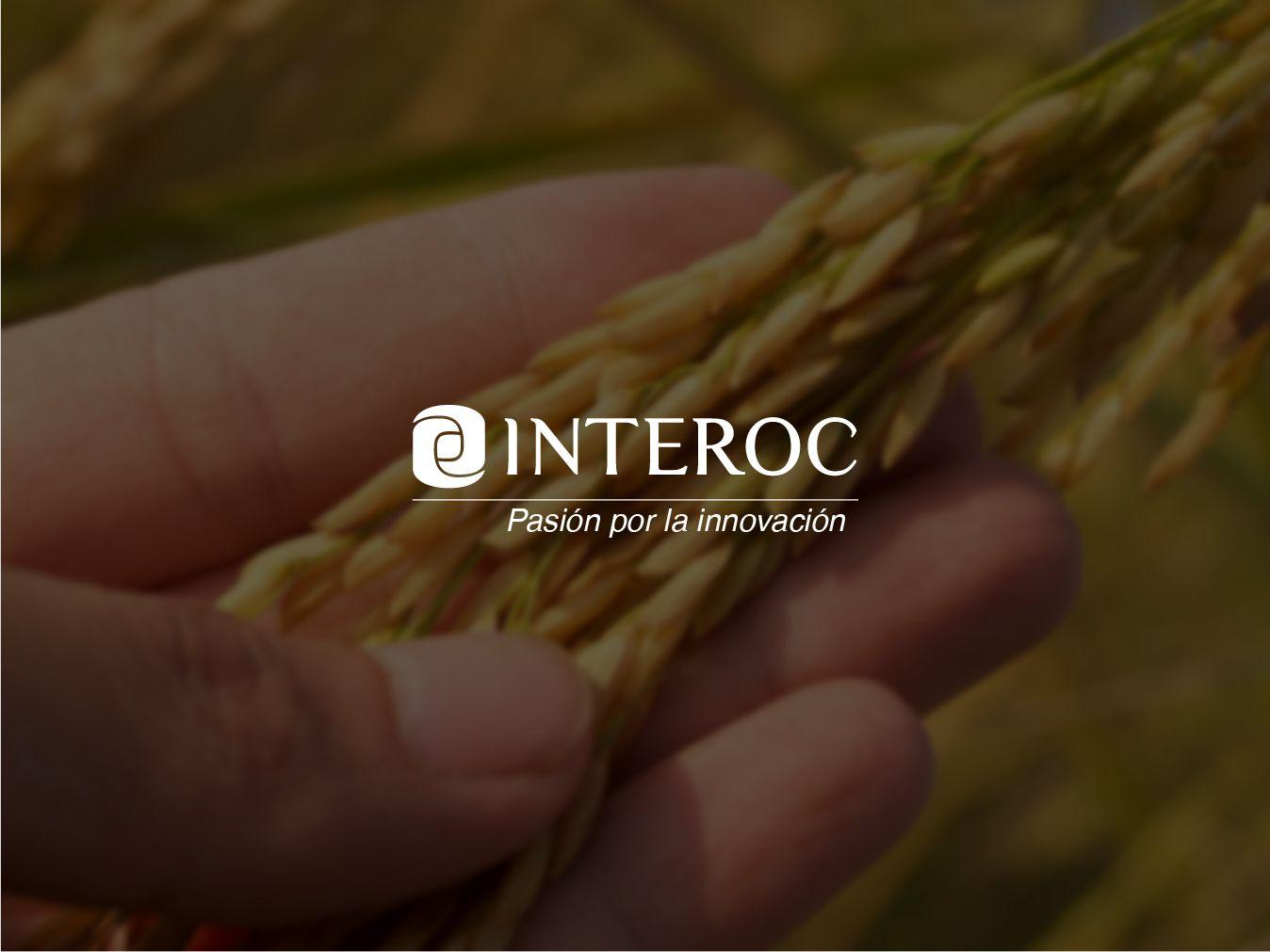 INTEROC consolida el liderazgo en cultivo de arroz en América Latina