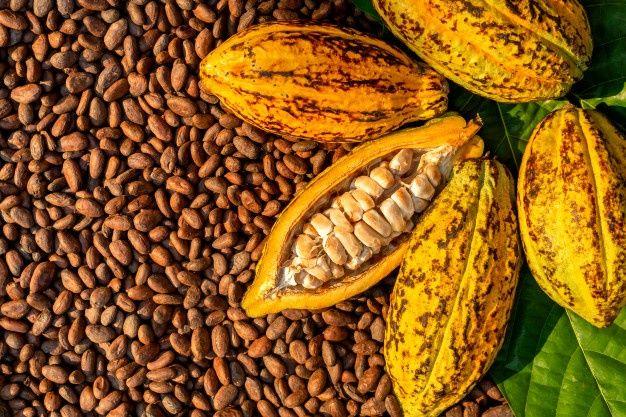 Conoce los departamentos que tienen el centro de producción cacaotero