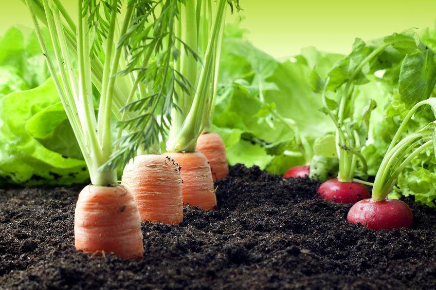 Agricultura orgánica ¿qué es y para qué sirve?