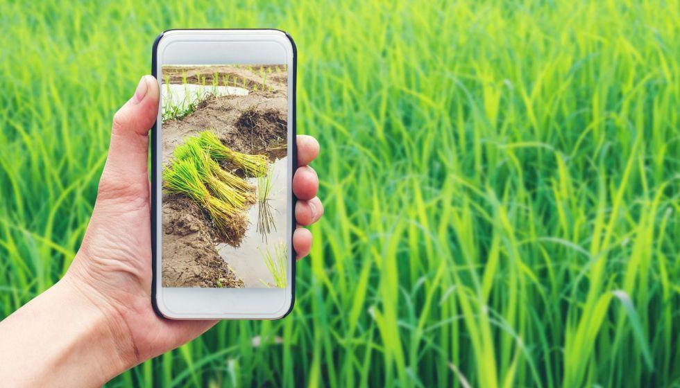 """Los """"Millennials del agro"""" realizan sus compras por internet"""