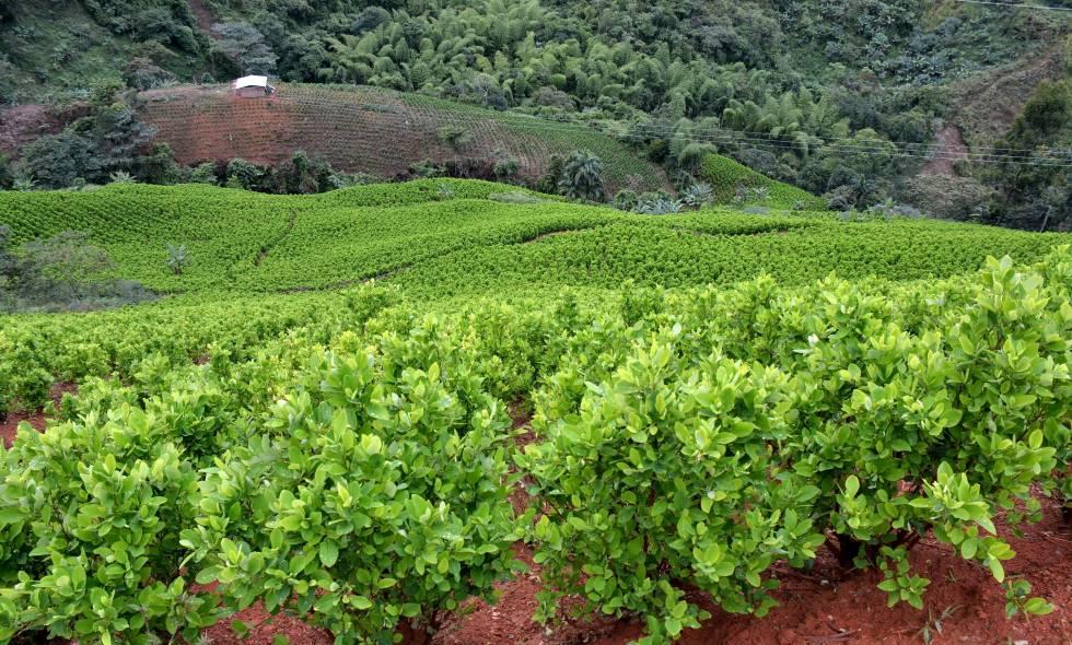 Conoce la importancia de la mecanización agrícola.