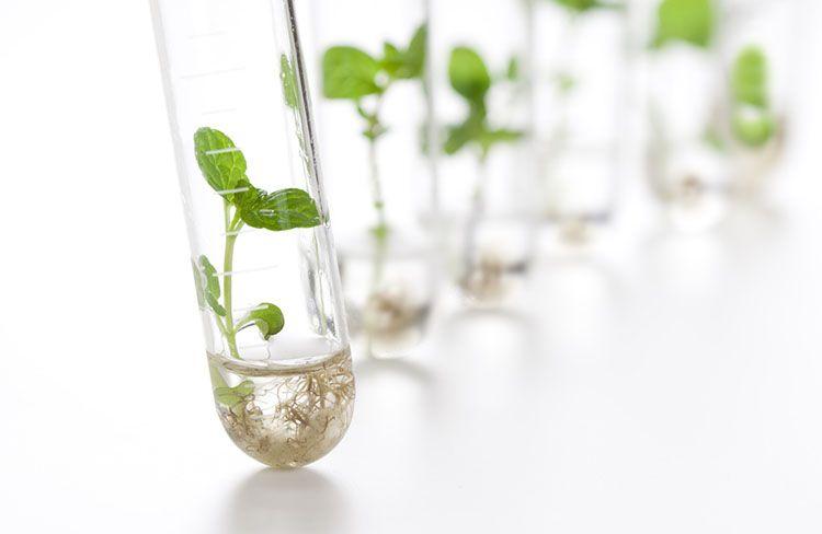 Nanotecnología, una herramienta para cultivos más sanos.